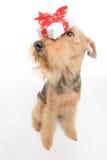 O cão é seu melhor amigo Fotos de Stock