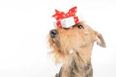 O cão é seu melhor amigo Foto de Stock Royalty Free