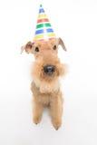 O cão é seu melhor amigo Imagem de Stock