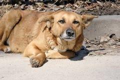 O cão é uma cadela triste do cão imagem de stock