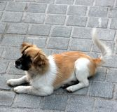 O cão Fotos de Stock