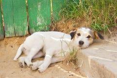 O cão Fotos de Stock Royalty Free