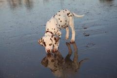 O cão fotografia de stock royalty free