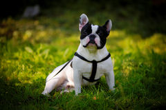 O cão Imagens de Stock