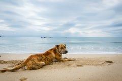 O cão apenas na areia da praia Fotos de Stock