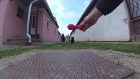 o Cão-bassê que salta e que trava um brinquedo plástico na mão dos proprietários vídeos de arquivo