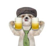 O cão bebe a cerveja e o cumprimento alguém Foto de Stock