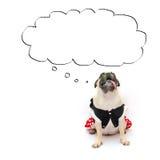 O cão bonito do pug do cachorrinho senta-se com língua para fora e olha-se acima à nuvem para a bandeira do texto da etiqueta Con Fotos de Stock Royalty Free
