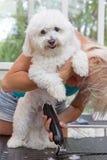 O cão branco bonito que está em seus pés traseiros é preparado foto de stock royalty free