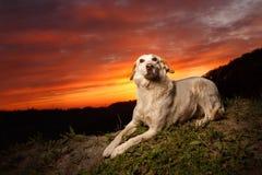 O cão branco da raça misturada encontra-se no comedoiro imagem de stock royalty free
