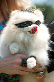 O cão branco pequeno desgasta a máscara do traje Foto de Stock Royalty Free