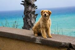 O cão com cortinas um olho, cão disperso pede o amor Imagens de Stock Royalty Free