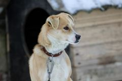 O cão com a mordida errada senta-se no frio fotos de stock royalty free