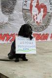 O cão com a tabela traduzida do ` do russo nossas vidas é mais caro do que um ` da bola de futebol na ação internacional para o p Fotos de Stock