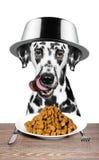 O cão com uma bacia em sua cabeça está indo comer Fotos de Stock Royalty Free
