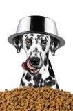 O cão com uma bacia em sua cabeça está indo comer Imagens de Stock