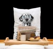 O cão come na cama e na bebida fotos de stock royalty free