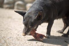 O cão come o osso foto de stock royalty free