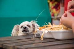 O cão come um proprietário fritado camarão do animal de estimação da alimentação de sal do camarão Fotografia de Stock