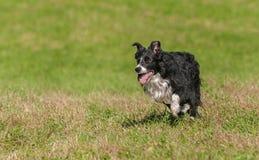 O cão conservado em estoque corre à esquerda Imagens de Stock Royalty Free