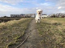 O cão corre na grama fotografia de stock royalty free