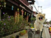 O cão da pele está em uma cesta em uma bicicleta fotos de stock