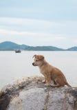 O cão da solidão senta-se na praia Fotos de Stock Royalty Free