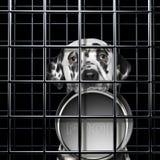 O cão dalmatian com fome com bacia vazia é punishe na gaiola imagens de stock