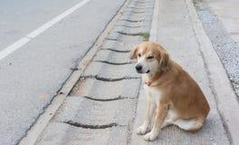 O cão de Brown senta-se pela estrada Foto de Stock