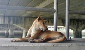 O cão de Brown senta-se sob a ponte Imagem de Stock