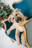O cão de cachorrinho bonito próximo decorou a árvore de Natal no estúdio Imagem de Stock