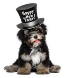 O cão de cachorrinho havanese bonito está vestindo um chapéu alto do ano novo feliz Imagens de Stock Royalty Free