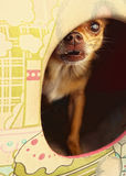O cão de Yourkshire esconde na casa do canil Fotografia de Stock