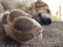O cão deixa cópias do prisioneiro de guerra em seu coração fotografia de stock royalty free