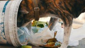 O cão desabrigado só está procurando o alimento em uma lata de lixo na lama dos pacotes e dos restos do alimento video estoque