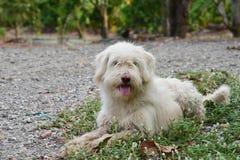 O cão desgrenhado agachou-se na estrada do cascalho Imagem de Stock