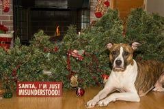 O cão destrói o Natal imagem de stock