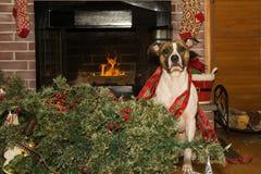O cão destrói o Natal fotos de stock royalty free