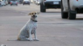 O cão disperso senta-se na estrada com passagem de carros e de motocicletas Ásia, Tailândia filme