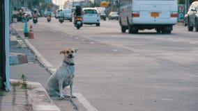 O cão disperso senta-se na estrada com passagem de carros e de motocicletas Ásia, Tailândia Movimento lento video estoque