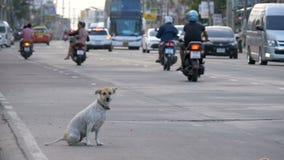 O cão disperso senta-se na estrada com passagem de carros e de motocicletas Ásia, Tailândia Movimento lento filme