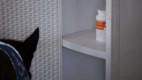 O cão do auxílio trouxe drogas video estoque