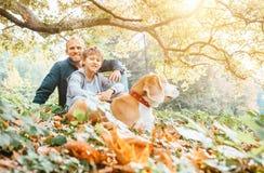 O cão do pai, do filho e do lebreiro anda no parque do outono, indiano morno summ foto de stock