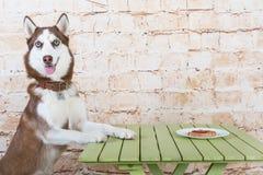 O cão do ` s da casca rouba uma parte de salsicha da tabela no segredo dos proprietários imagens de stock royalty free