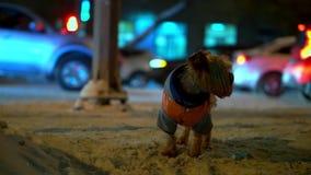 O cão do yorkshire terrier na laranja abaixo do revestimento obteve perdido em uma rua nevado da cidade na noite Os carros estão  filme