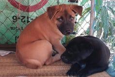 O cão dois pequeno bonito estava encontrando-se fotos de stock