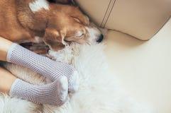 O cão e a mulher do lebreiro relaxam junto no sofá confortável foto de stock