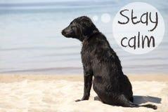 O cão em Sandy Beach, estada do texto acalma-se imagem de stock