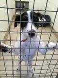 O cão em um abrigo do salvamento sentou-se em uma gaiola imagens de stock royalty free
