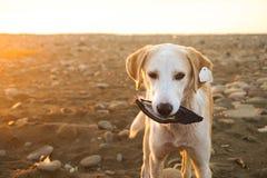 O cão em uma praia Fotos de Stock Royalty Free